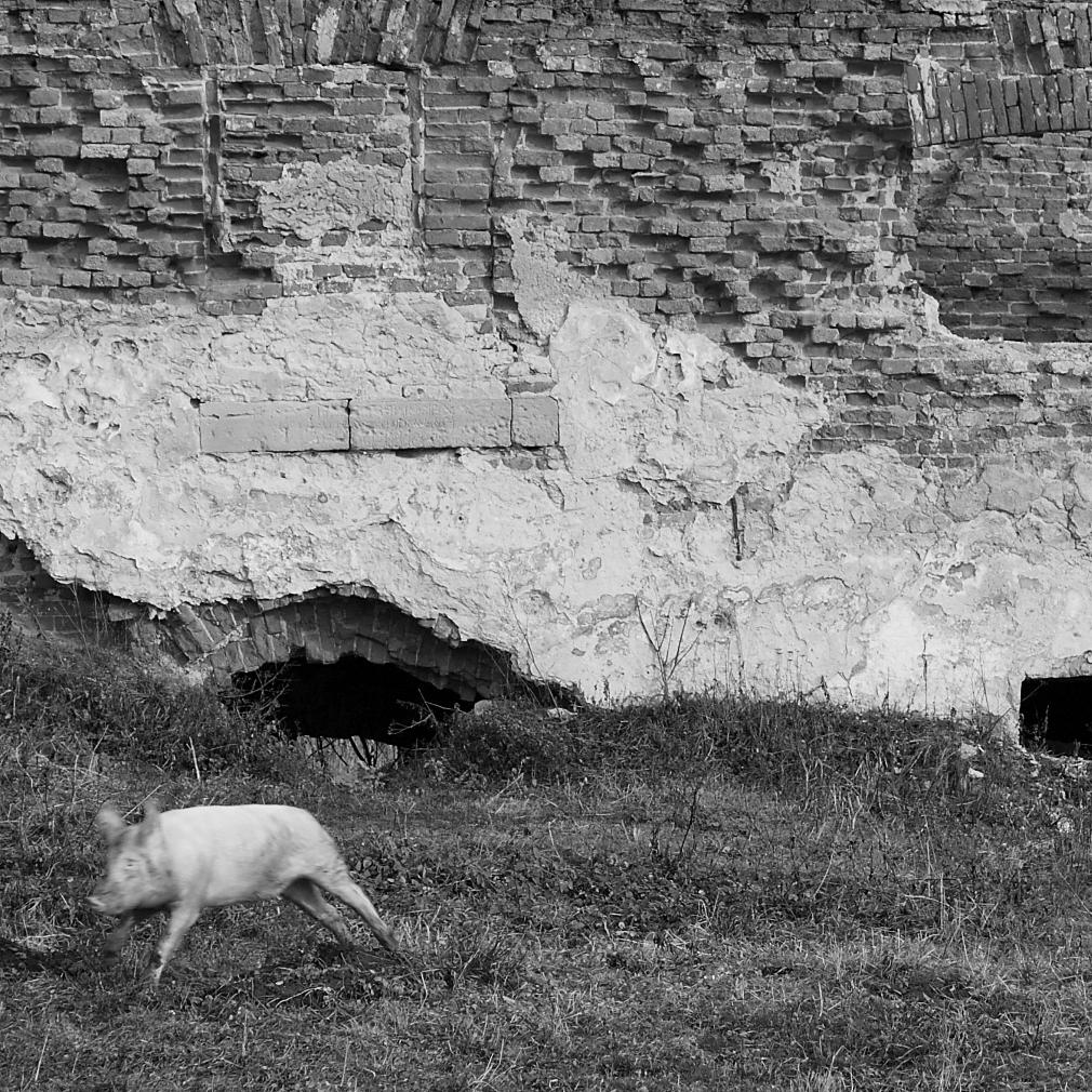 екскурсія мала підкова замки львівщини